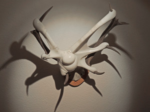 helotroph cervi